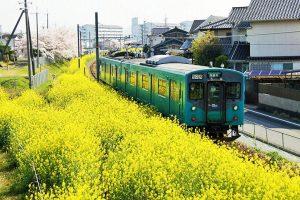 加古川線と菜の花
