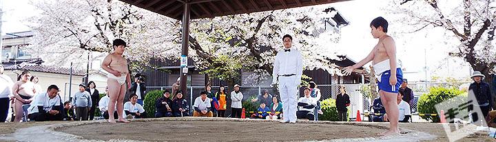 わんぱく相撲-加古川場所